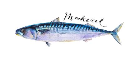 mackerel: mackerel fish whole isolated on a white background