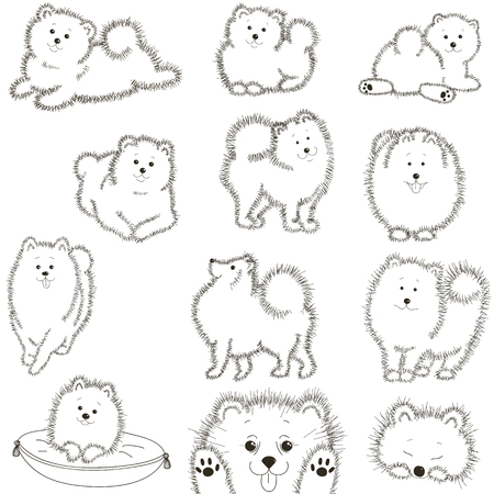 lap dog: Set fluffy black and white dog. Vector illustration.