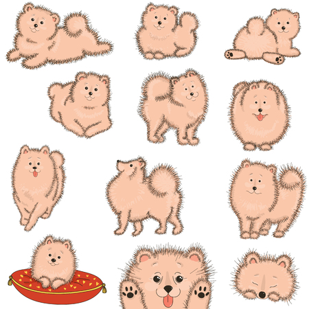shepard: Set fluffy dog. Vector illustration on white background. Illustration