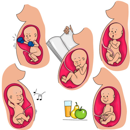 Intrauterine life. The fetus in the mothers womb. Incubation.