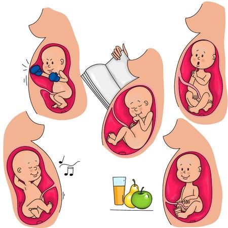 La vie intra-utérine. Le foetus dans le ventre des mères. Incubation. Banque d'images - 71149033