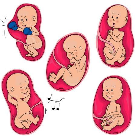 Życie wewnątrzmaciczne. Płód w łonie matki. Inkubacja. Ilustracje wektorowe