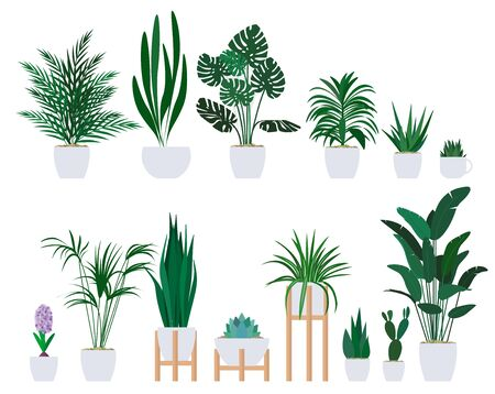 Set of decorative houseplants to decorate the interior of a house or apartment.