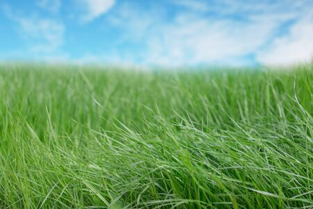 Green grass and blue sky with clouds on a sunny day. Standard-Bild - 139710438