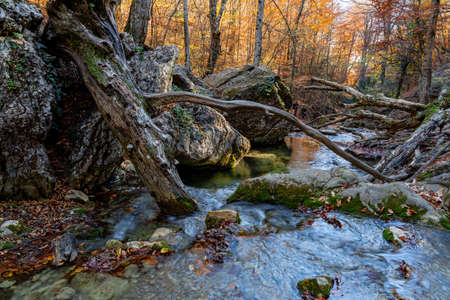 Thin streams of a mountain waterfall and the huge roots of an old tree.