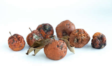 Many spoiled brown apples isolated on white background.