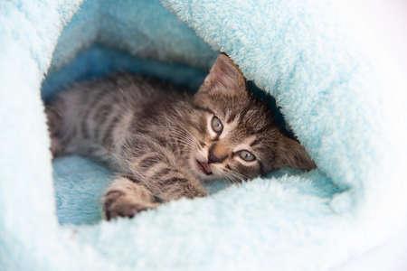 Tabby kitten sleeps in a soft blue house.