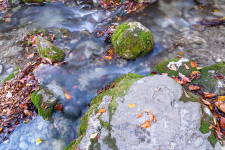 Autumn leaves float along a mountain stream around a moss-covered stone