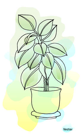 Ficus plant in a pot. Beautiful watercolor background. Blurry, soft colors. Vector drawing isolated. You can use a coloring book as an independent drawing or together with a colored background.