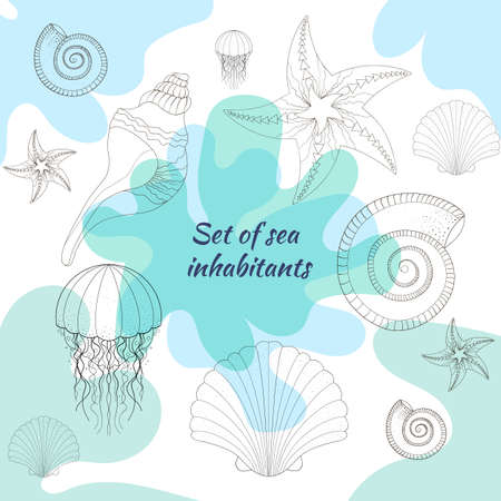 Set of cea. Hand-drawn illustration, lines. Collection of sketches of various shells of molluscs of different shapes.