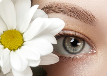Close-up macro of beautiful female eye with perfect shape eyebrows. Clean skin, fashion naturel make-up. Good vision. Spring natural look with chamomile flowers Stock Photo