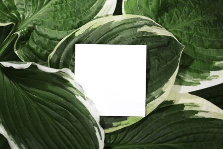 Beautiful Layout Made of Tropical Green Leaves and Empty White Paper Card For Copy Space. Minimal Natural Flat Background