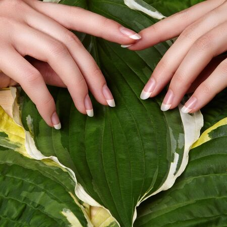 Beautiful Female Palms with Perfect French Manicure on Green Leaves Background. Natural Cosmetic for Hand Care. Light Nails Polish, Clean Soft Skin.