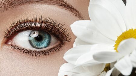 Close-up of beautiful female eye with perfect Eyelashes. Clean skin, fashion naturel make-up, long lashes. Good vision. Spring natural look with chamomile flowers.