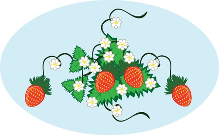 Curl from strawberry berries on the isolated background Vector