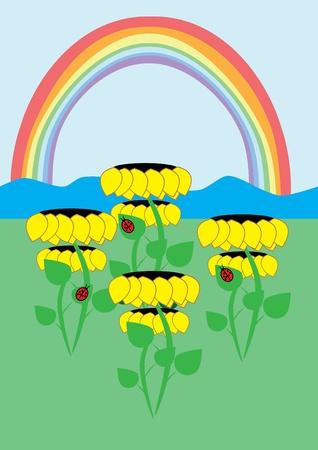 Sunflowers and rainbow. Illustration. Vector