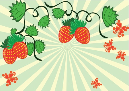 Curl from strawberry berriesand butterflies. Illustration. Vector