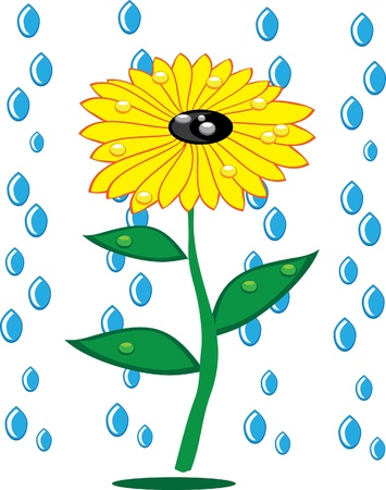 Sunflowers and rain drops on isolated background. Illustration. Vector