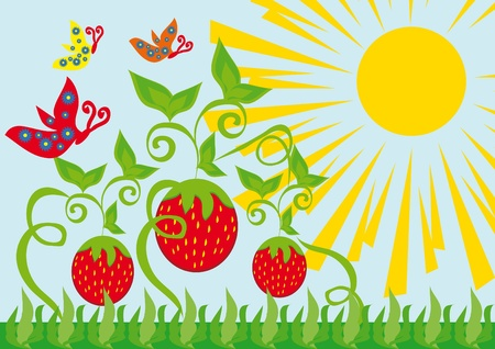 Curl from strawberry berries and butterflies. vector illustration Vector