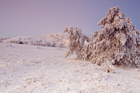 Frozen trees with snow in the mountains at the sunrise