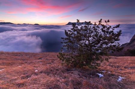 O pinheiro sobre as nuvens nas montanhas Imagens