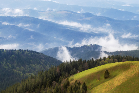 Carpathian upland pasture between wooded hills in low cloudy   Stock Photo