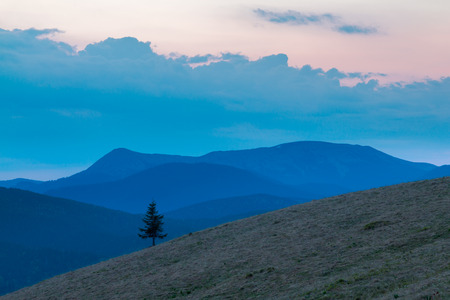 Lonely tree on mountainside in the twilight