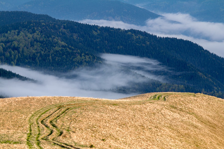 Ruts in the Carpathian mountains  Against a background of pine forest and low clouds