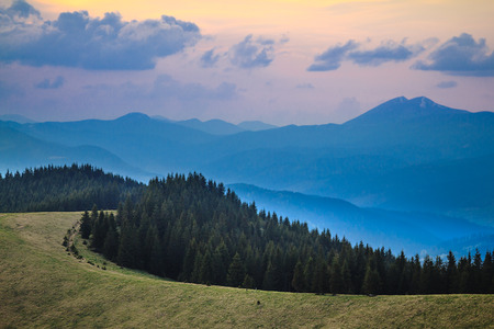 Twilight over pine forest in the Carpathian mountain