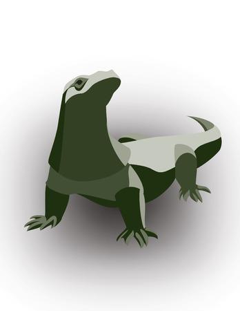 varanus: Komodo Dragon, Varanus komodoensis.