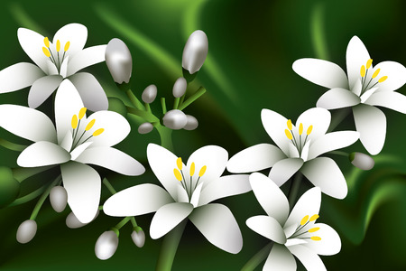 Beautiful jasmine flowers. Vector