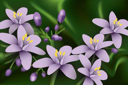 chinese herbs: Beautiful flowers. Illustration