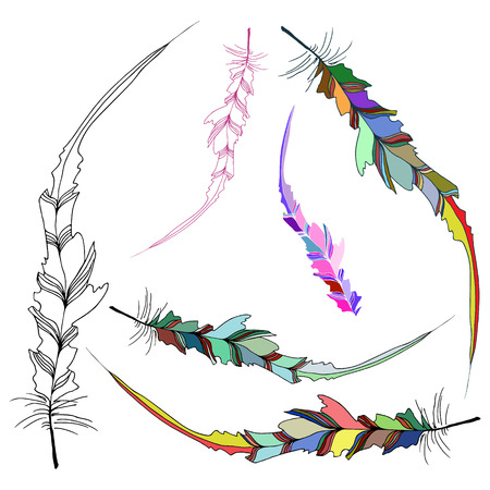 scribe: Hand illustration bird feather. Symbol of writing and learning. The old way of writing. Vector graphic design. Isolated on white background.