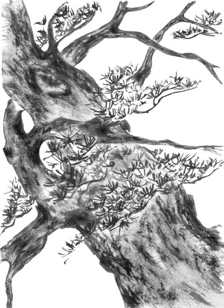 Chinese pine. Japanese watercolor. Indian ink sumi-e, go-hua, u-sin for tatoo. Oriental traditional painting. Isolated on the white background.
