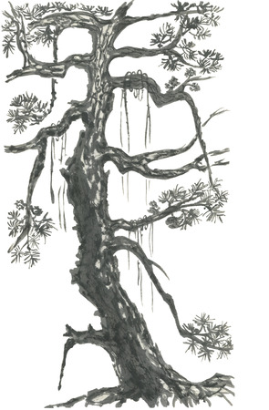 Chinese pine. Japanese watercolor. Indian ink sumi-e, go-hua, u-sin for tattoo. Oriental traditional painting. Isolated on the white background.