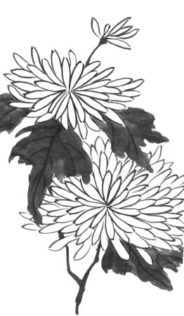 Chrysanthemum as a symbol of Japan and China. Contour   flowers and leaves. Traditional oriental ink painting sumi-e, u-sin, go-hua. 스톡 콘텐츠