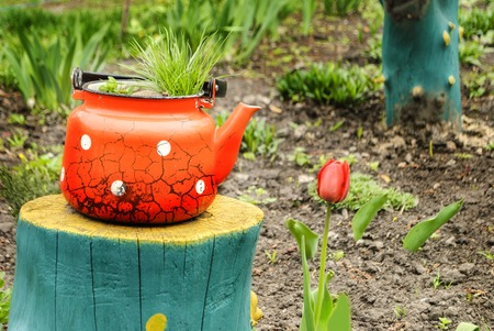 Old kettle instead of a flower pot