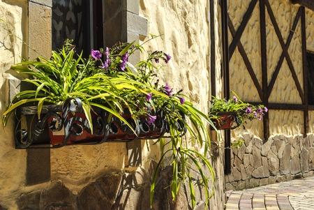 Street floristic decor - row of Petunia flowers in pots on the window