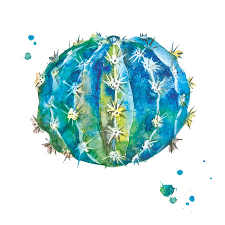 Cactus with spines in watercolor style. Illustration of spherical shape cactus with watercolor splashes. Isolated plant on white background. 写真素材