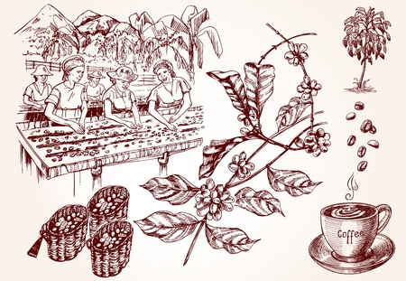 Coffee harvesting. Women performs the drying of coffee beans. Vintage illustration of coffee making process. Vector illustration art.