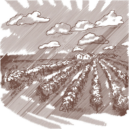 wine field. vineyards and house in countryside. vector vintage illustration in engraving style