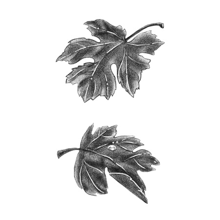 Grape leaves in monochrome sketch style. Leaves isolated on white background. Sketch drawn of pencil. Vintage style illustration.