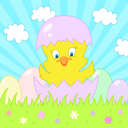hatched: Newly hatched chick on spring Background with