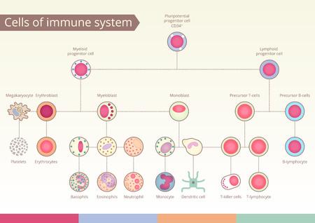 Origin of Cells of immune system. Medical benefit, the study of immunology. design elements. Stock Illustratie