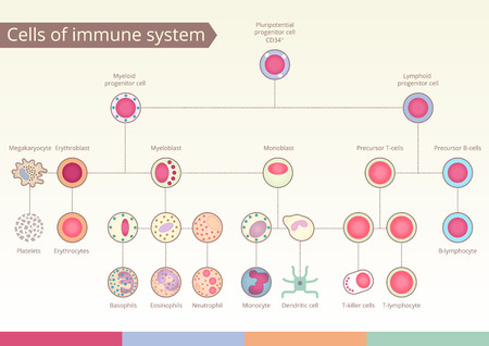 Origin of Cells of immune system. Medical benefit, the study of immunology. design elements. Illustration