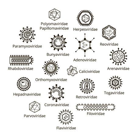 Classification of viruses. Enveloped viruses, Nonenveloped viruses. Vector biology icons, medical virus icons.