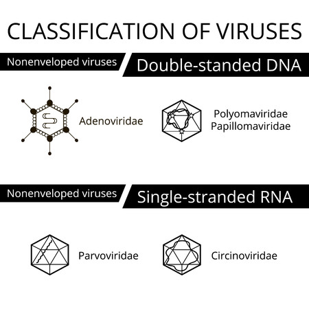viruses: Classification of viruses. Nonenveloped viruses. Vector biology icons, medical virus icons.