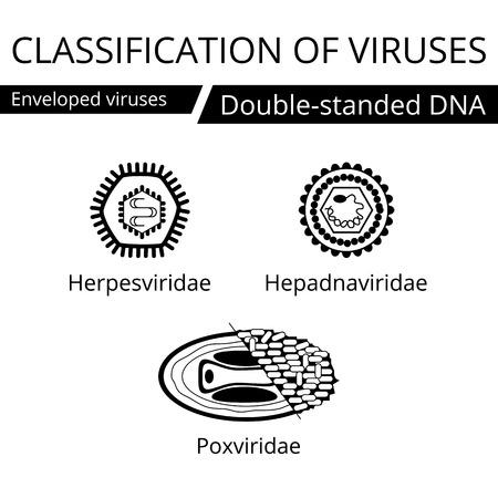 viruses: Classification of viruses. Enveloped viruses. Vector biology icons, medical virus icons. Illustration