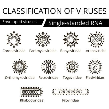 classification: Classification of viruses. Enveloped viruses. Vector biology icons, medical virus icons. Illustration