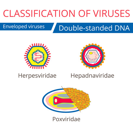 enveloped: Classification of viruses. Enveloped viruses. Illustration